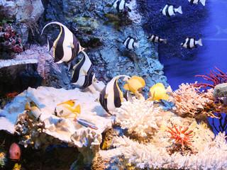Fototapeta na wymiar ryby