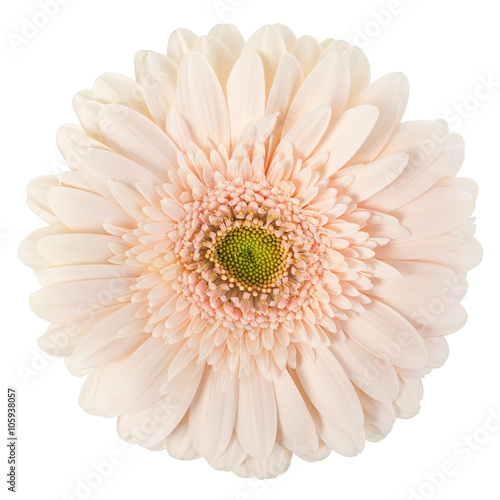 Deurstickers Gerbera white gerbera on isolate background