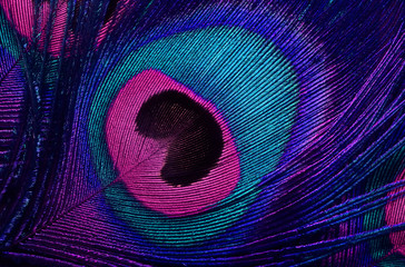bright background the pattern of a peacock's tail