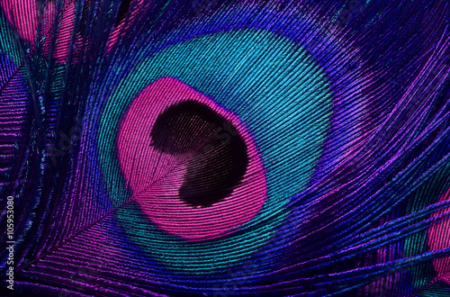 Poster Paon bright background the pattern of a peacock's tail