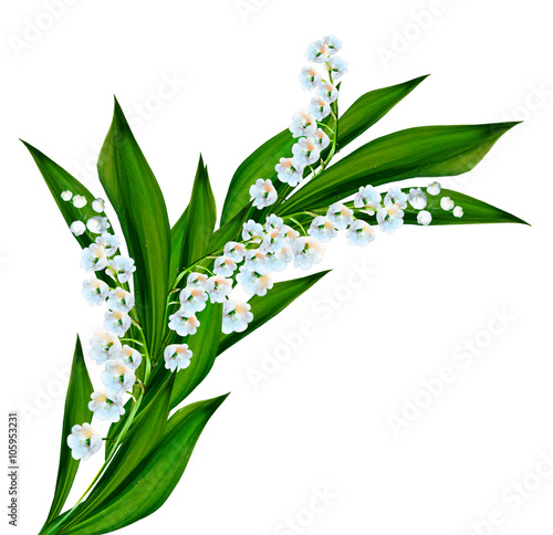 Poster Lelietje van dalen flowers lily of the valley
