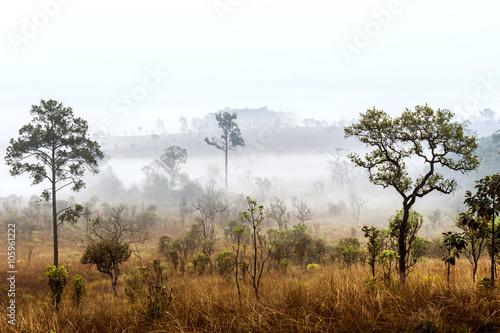 Obrazy na płótnie Canvas Sunrise in savanah meadow