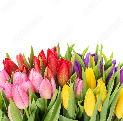 Poster Tulp Bouquet of multicolor tulips over white background
