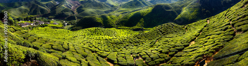 Canvas Print Tea plantation