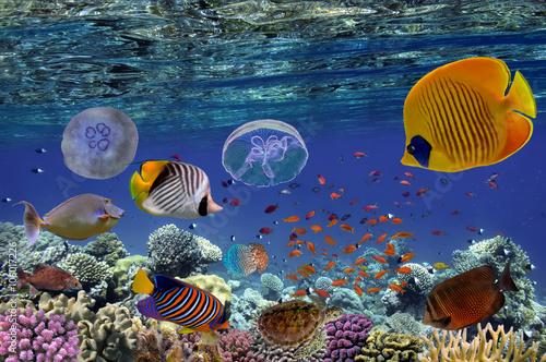 tropikalna-ryba-i-twarde-korale-w-morzu-czerwonym