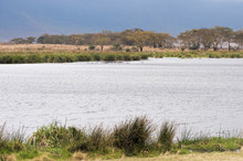 Landscape  Ngorongoro Conserva...