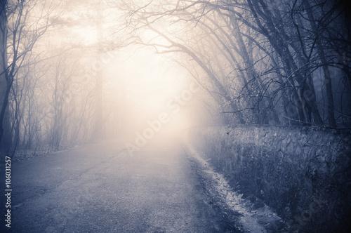 Fotografia, Obraz  Foggy landscape