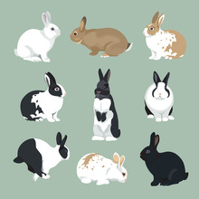 Easter Bunny Vector Illustrati...