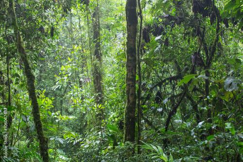 krajobraz-dzungli