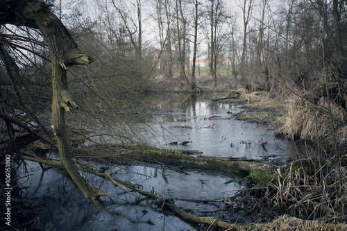 Fotografie, Obraz  Swamps in autumn