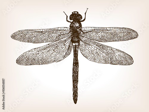 Fotografía  Dragonfly insect hand drawn sketch vector