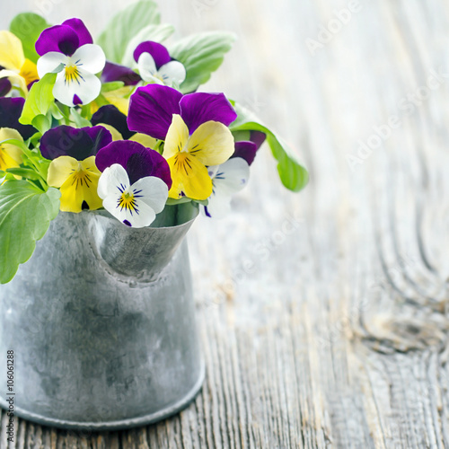 Violet pansies bouquet