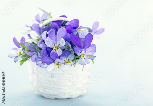 Bouquet of violet pansies