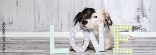 """Foto  Lustiger, süßer Hund mit schwarz-weißen Gesicht mit den Buchstaben """"Love"""""""