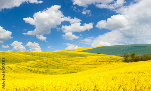 Spoed Foto op Canvas Oranje Spring waves hills landscape of colorful fields and beautiful b