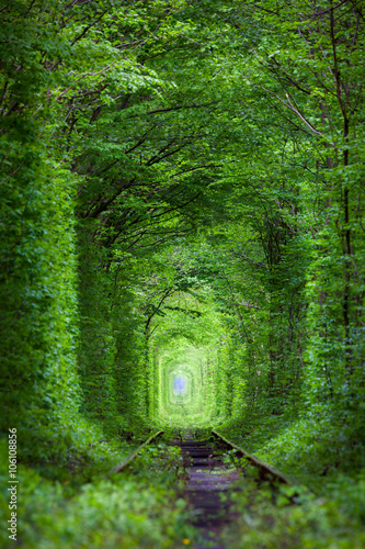 Photo sur Toile Vert Wonder of Nature - Real Tunnel of Love, green trees