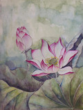 piękny kwitnący lotos - 106119022
