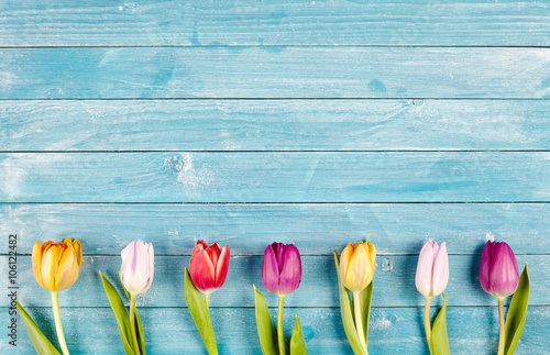 Fotografie, Obraz Border of fresh multicolored spring tulips