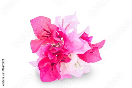 Fotografia A bunch of bougainvillea flowers isolated on white
