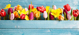 Fototapeta Tulips - Colorful arrangement of fresh spring flowers
