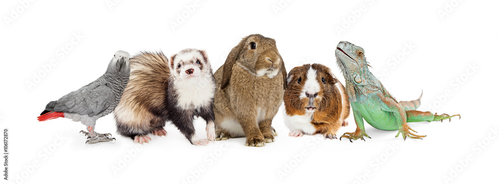 Fototapeta Group of Small Domestic Pets Over White