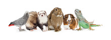 Group Of Small Domestic Pets O...