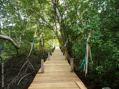 Fototapety, obrazy: Walkway with wooden bridge through mangrove forrest