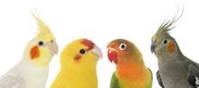 Portrait Of Birds