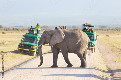Tourists in safari jeeps watching and taking photos of big wild elephant crossing dirt roadi in Amboseli national park, Kenya.