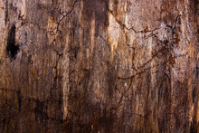 Moss And Mold Affect A Wooden Planks.