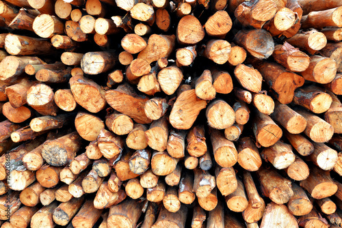 Photo  Stack of wood prepared for making charcoal