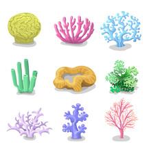 Colorful Corals, Reef Nature Marine  Vector Underwater Flora, Fauna.