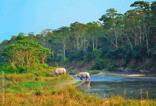 Spoed Foto op Canvas Neushoorn Wild landscape with asian rhinoceroses in Chitwan , Nepal