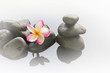plumeria or frangipani on water and pebble rock