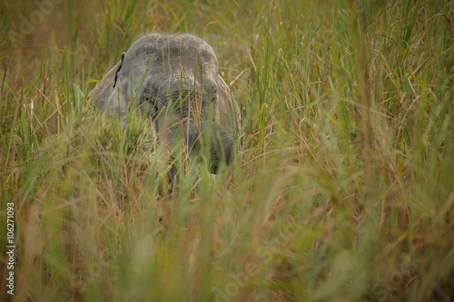 Photo  Big wild indian elephant in Kaziranga/big indian elephant in Kaziranga