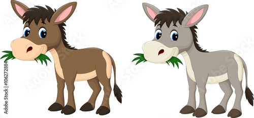 Cuadros en Lienzo Funny donkey eating grass