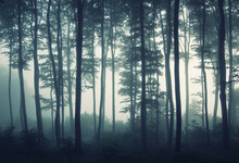 Edge Of Forest In Mist