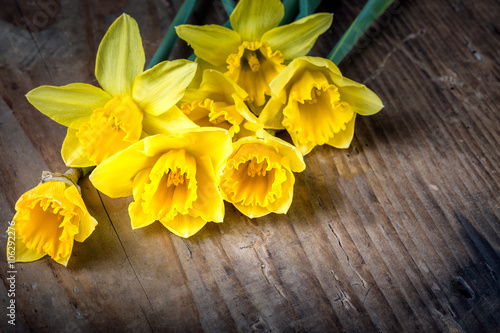 Deurstickers Narcis Bunch of yellow daffodils with blossom