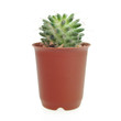 Cactus in pot on white background