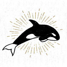 Hand Drawn Textured Icon With Killer Whale Vector Illustration