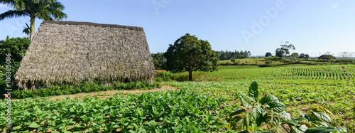 Photo  Tobacco plantation in the Vinales valley