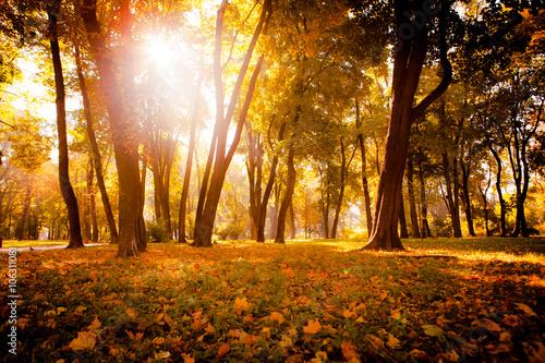 Fototapeta Yellow, orange and red autumn leaves in beautiful fall park. obraz na płótnie