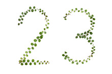 "Alphabet Font Number ""2,3"" From  Climber Leaf, Ivy Leaf, Green Leaf On Isolated."