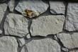 Kamień wapienny,