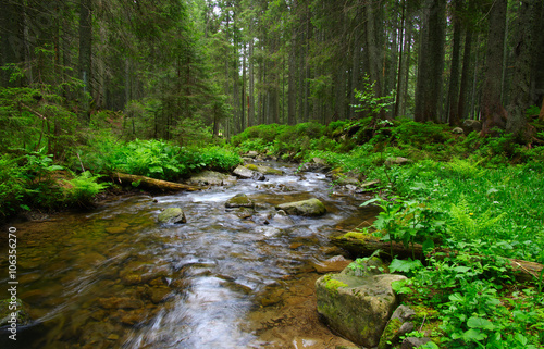 Foto auf Gartenposter Fluss Stream in the wood