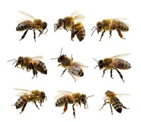 Set pčela