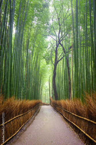 Foto op Plexiglas Bamboe Path to bamboo forest, Arashiyama, Kyoto, Japan