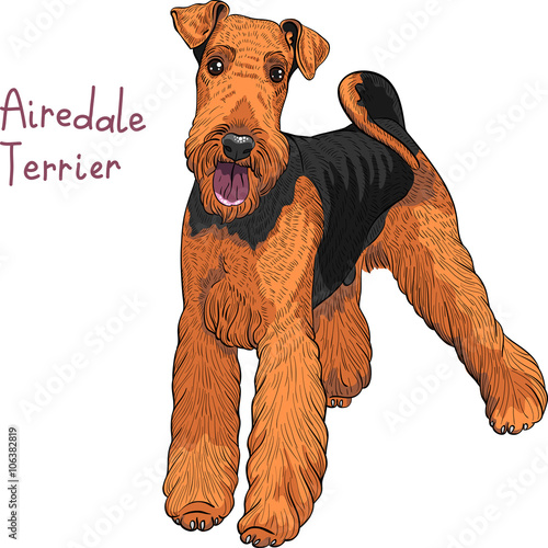 Photo color sketch of the dog Airedale Terrier breed