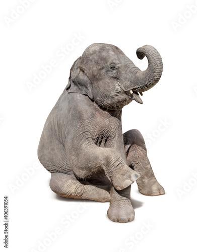 Foto op Aluminium Olifant elephant sit down isolated on white background
