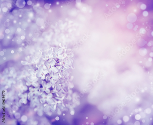 Foto op Plexiglas Lilac Beautiful flowers of lilac , close up. Lilac blooming background. Light pastel floral border
